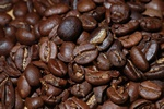 Kaffe (Coffea sp.)
